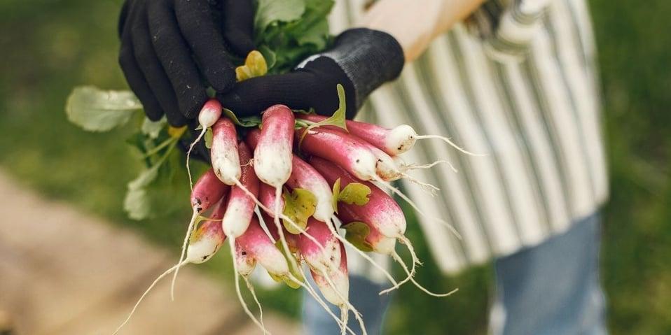 fruits et légumes locaux et de saison